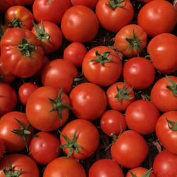 Tomate Grappe 1 KG